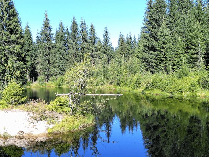 Waldbaden im Erzgebirge